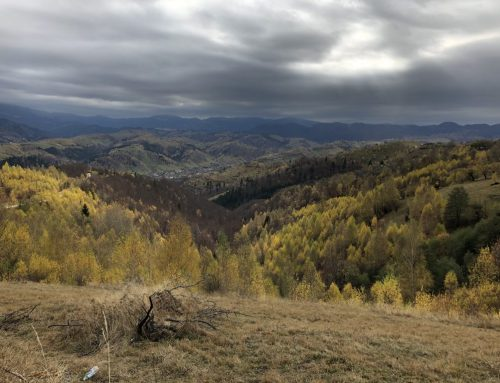 Carpathian Bioregion: First Ground Testing of IUCN Connectivity Guidelines