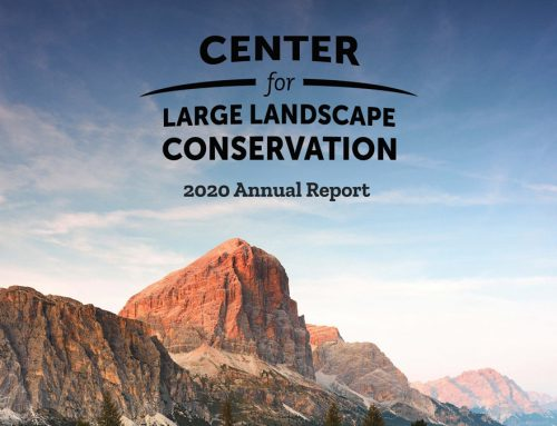 CLLC Releases 2020 Annual Report