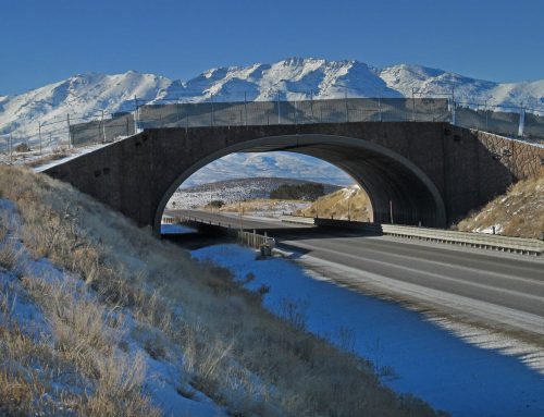Reports Offer Guidance on Why and How to Build Wildlife Crossings