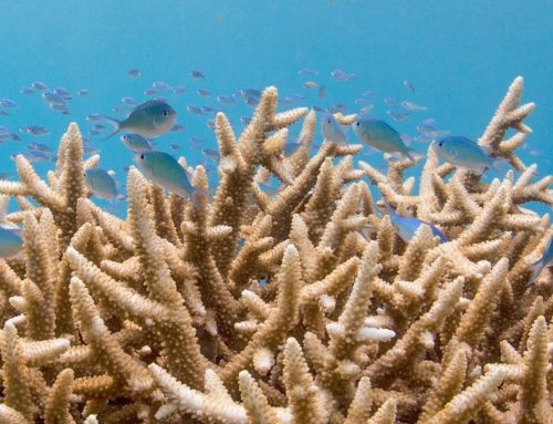 'Rules of Thumb' for Marine Connectivity Conservation Released Today